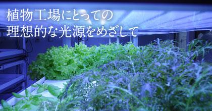 植物工場にとっての理想的な光源をめざして – 植物工場の生産コストを低減するという課題に光源の開発で貢献。 –
