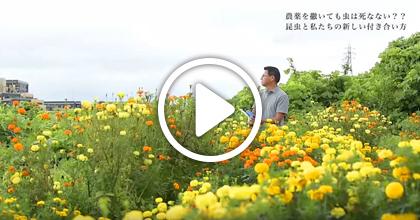 動画でわかる!「応用昆虫学」―農薬を撒いても害虫は死なない??昆虫と私たちの新しい付き合い方―