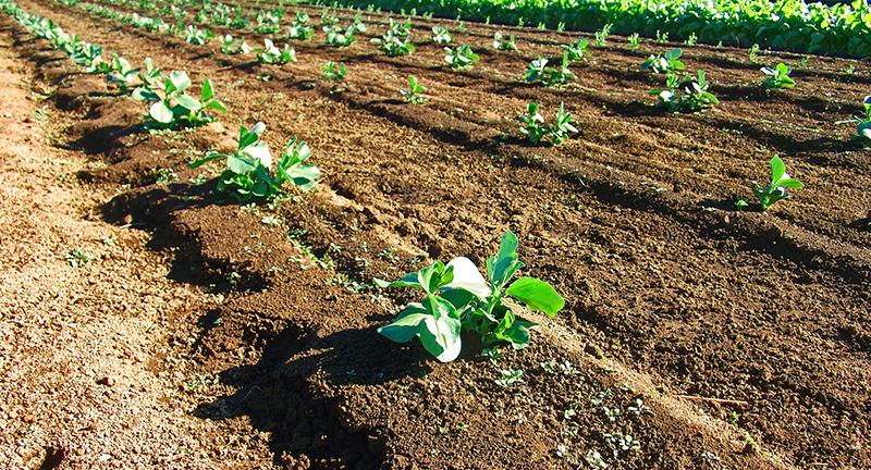 「空間の放射線が作物に移る」ことはない!! 風評被害は誤解から生まれる