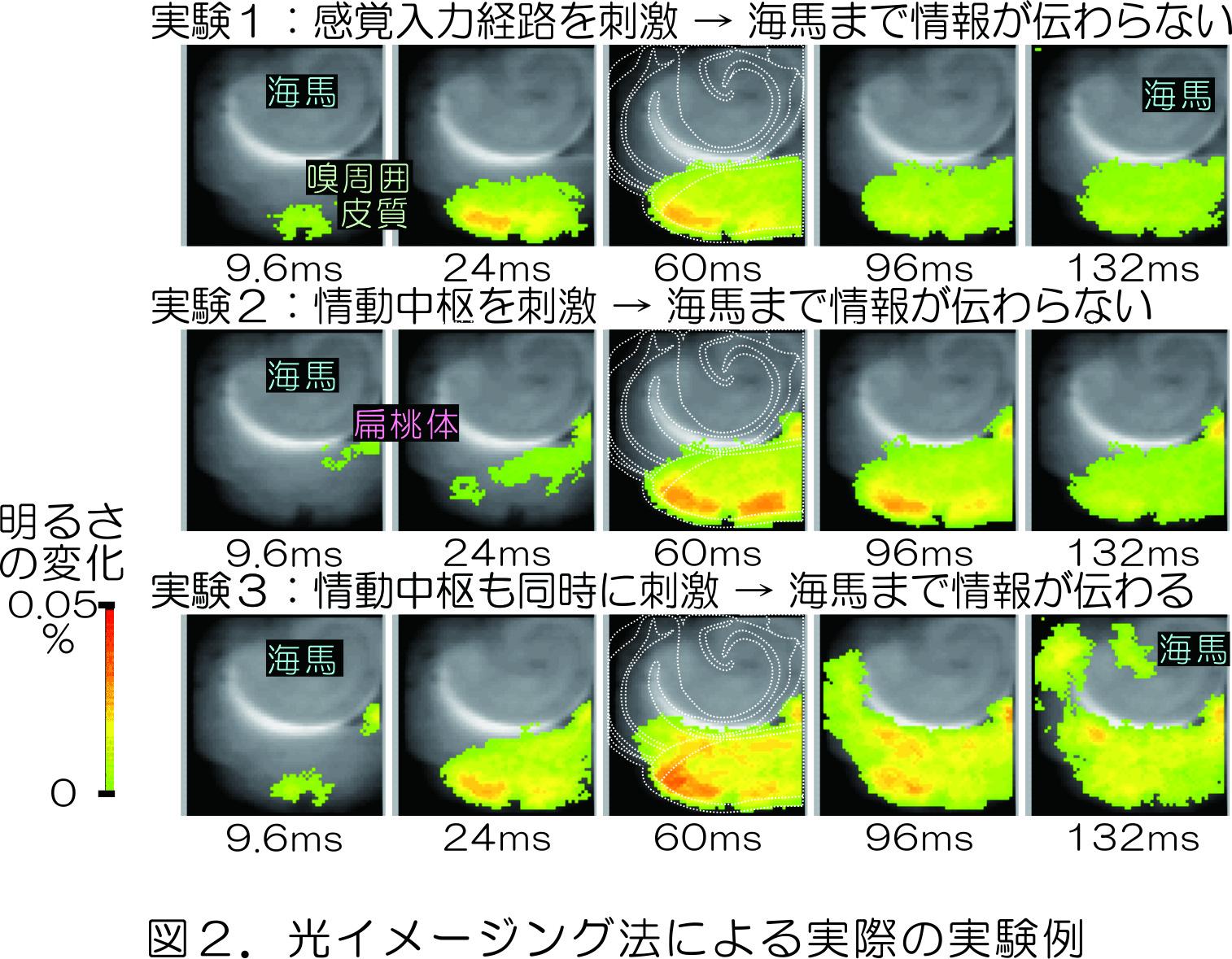 図2.光イメージング法による実際の実験例