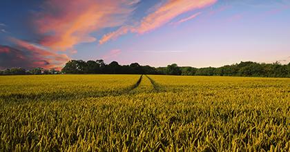 農業では人自身がビッグデータ。その活用システム構築を目指す
