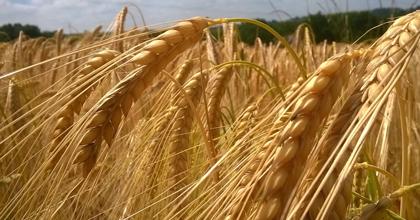 気候変動に関する日本の優れた農業技術が世界を救う!?