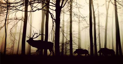 動物の移動や行動がわかると、効果的な環境保全もわかってくる