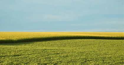 農作物の被害を減らす最新技術は植物自体から学んだもの